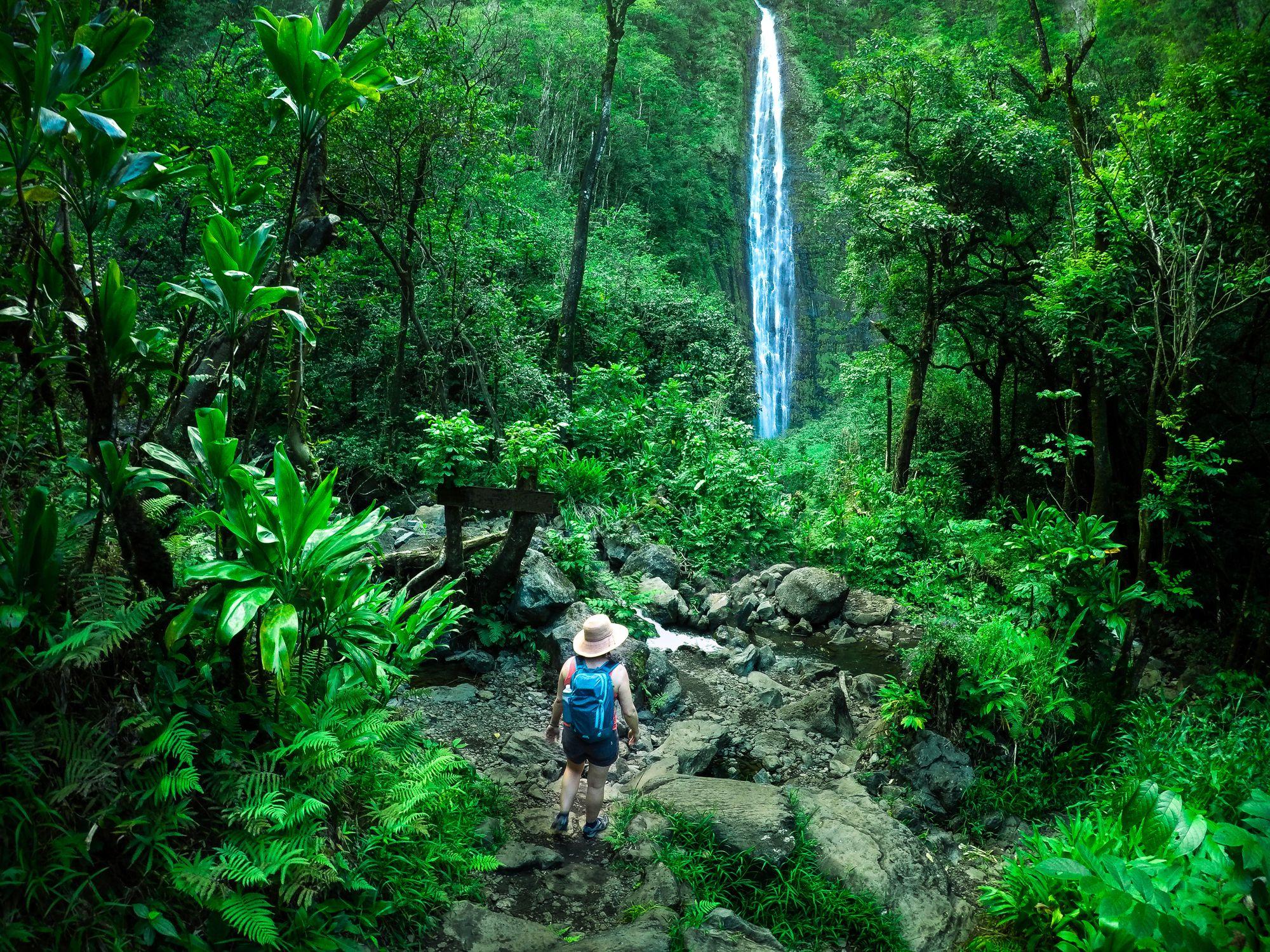 Woman hiking towards a waterfall, Maui, Hawaii, America, USA