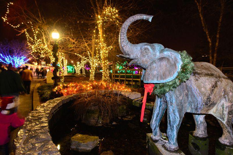Christmas At The Zoo.St Louis Zoo S Wild Lights Christmas Display