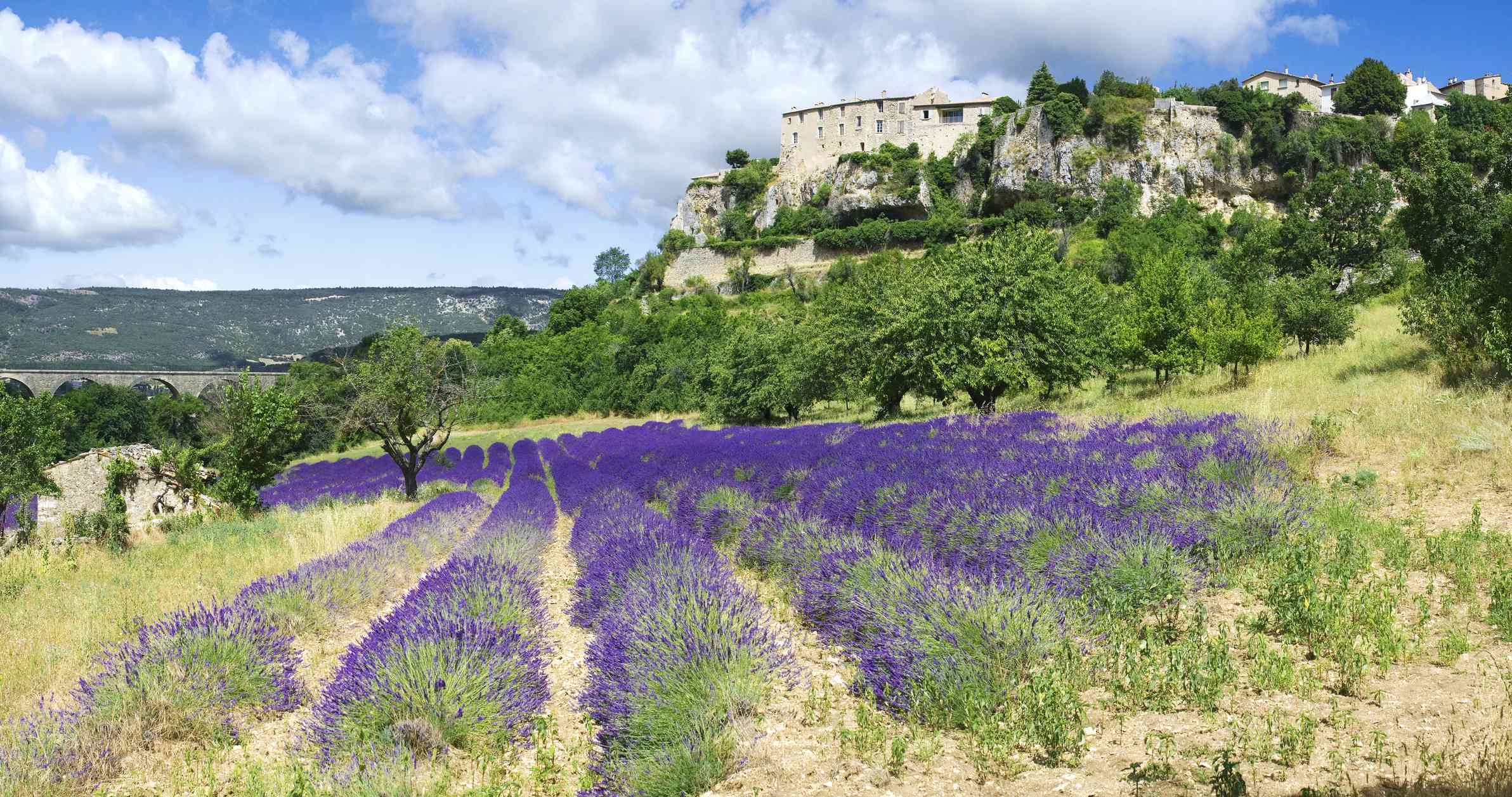 Town and lavender fields in Sault, France