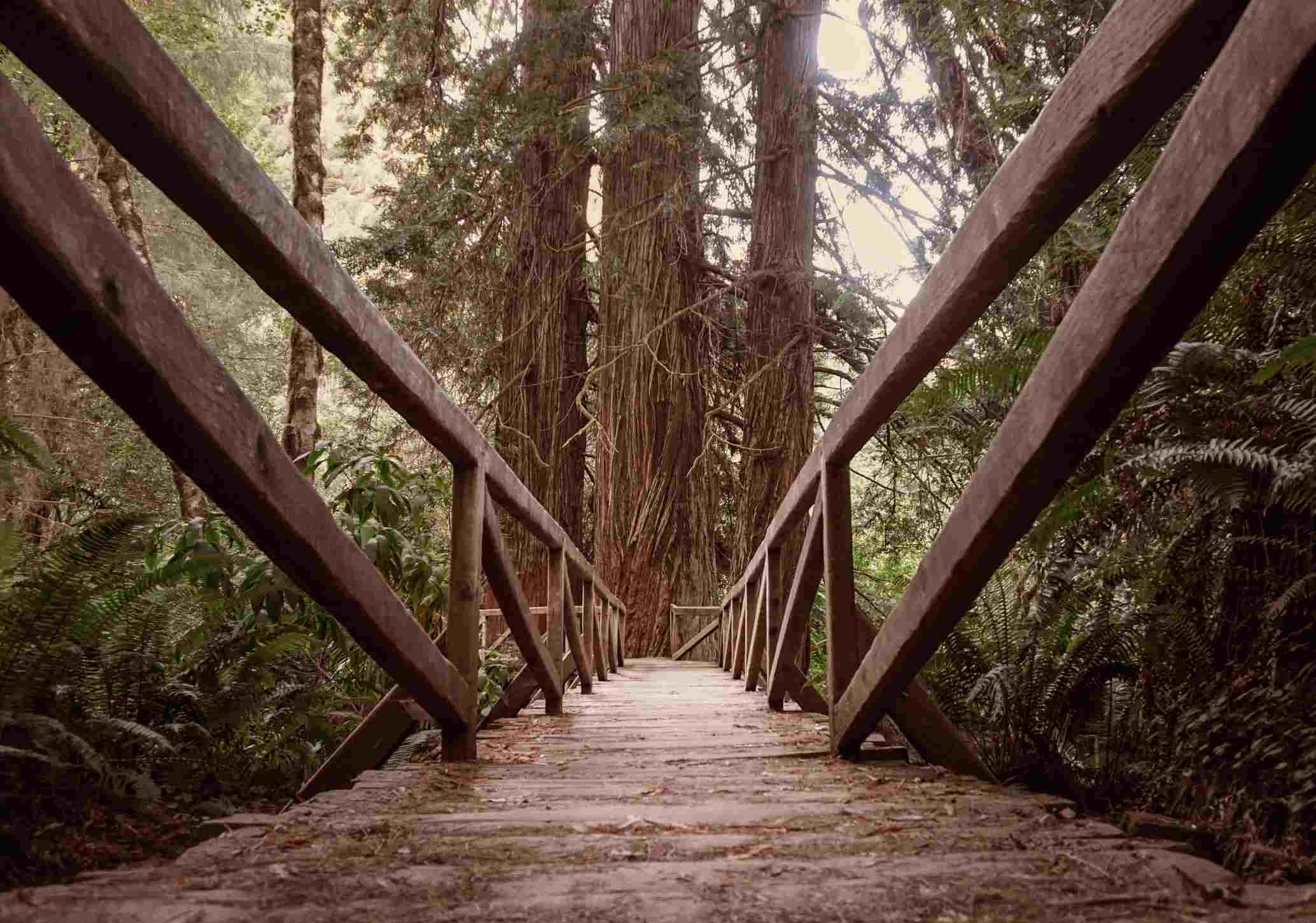 Prairie Creek Redwoods State Park, Orick