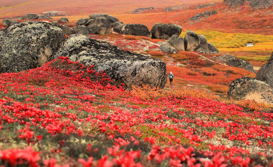 Bering Land Bridge National Preserve, Alaska