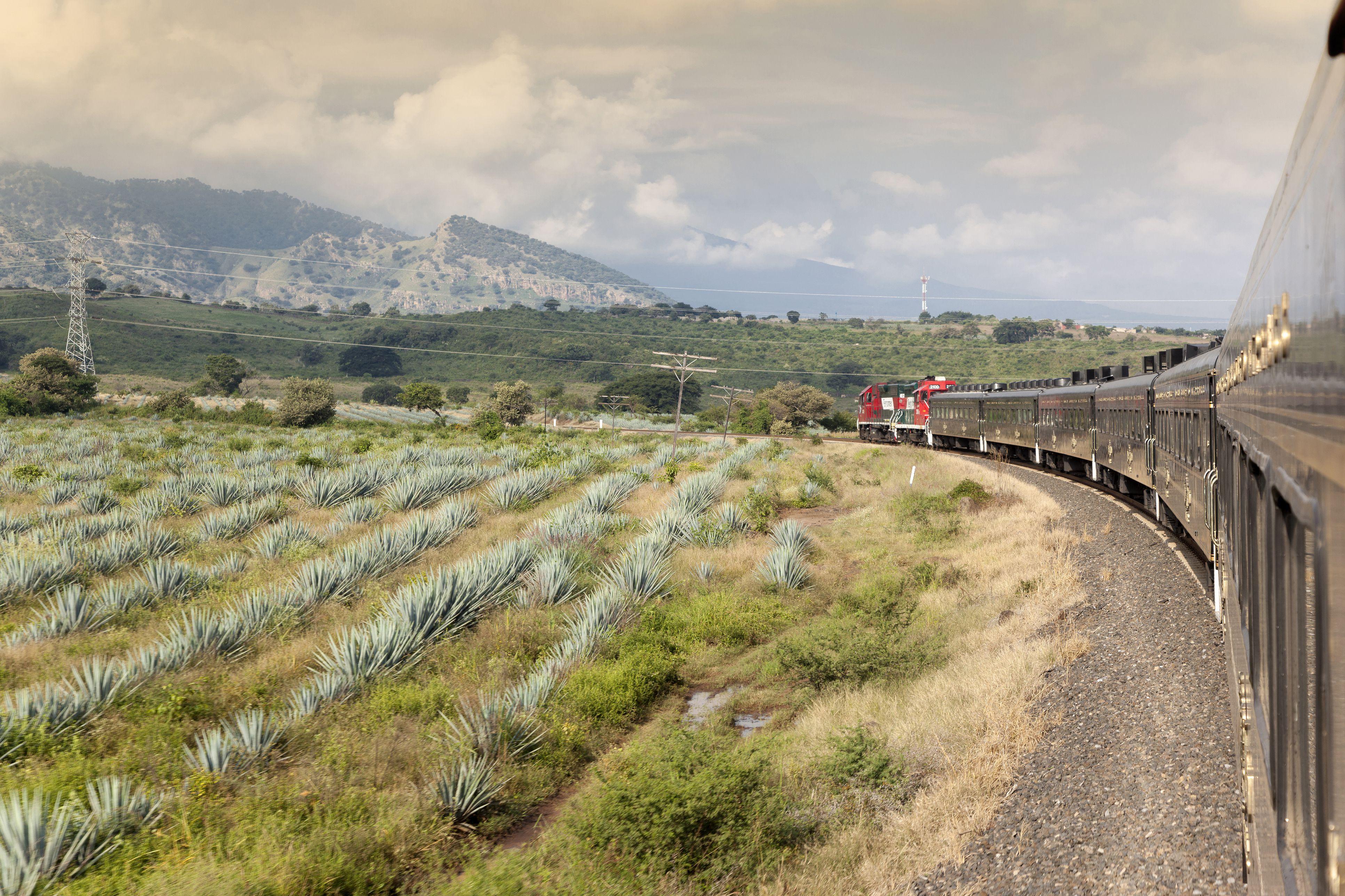 Train speeds past agave fields