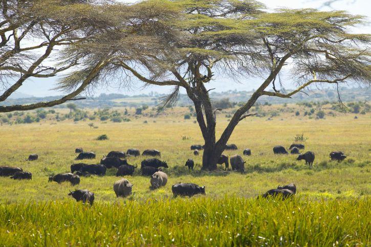 Lewa Conservancy, Kenya