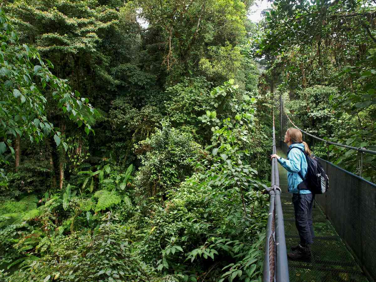 woman on suspension bridge looking at green forest in the Monteverde Cloud Forest Reserve