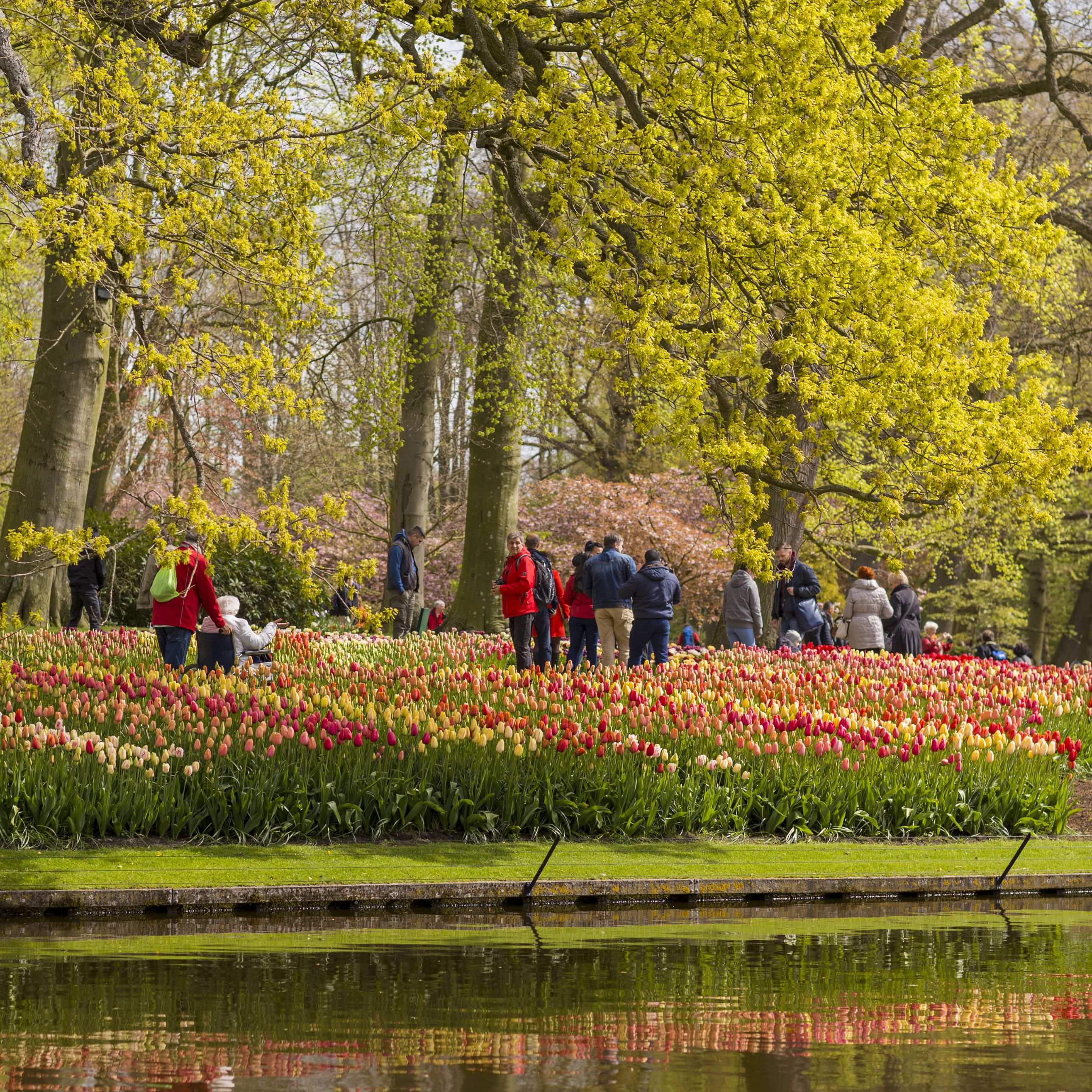 Guide to Seeing the Tulips Near Amsterdam on netherlands holland map, giethoorn holland map, zeeland holland map, edam holland map, maastricht holland map, amersfoort holland map, scheveningen holland map, amsterdam holland map, arnhem holland map, rotterdam holland map, europe holland map, leiden holland map, utrecht holland map, nijmegen holland map, hillegom holland map, eindhoven holland map, leeuwarden holland map, randstad holland map, delft holland map, haarlem holland map,