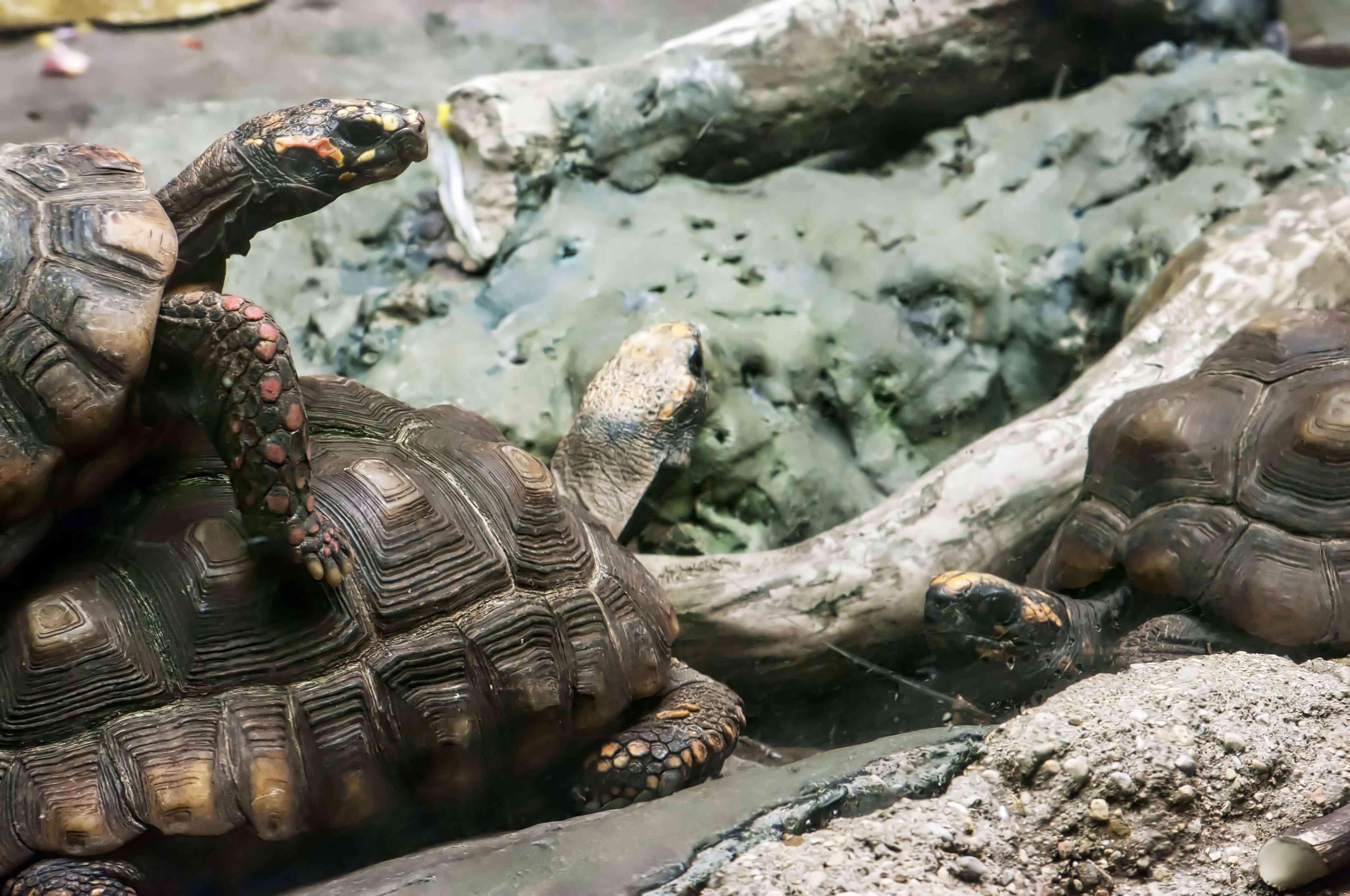 Turtles at the Shedd Aquarium