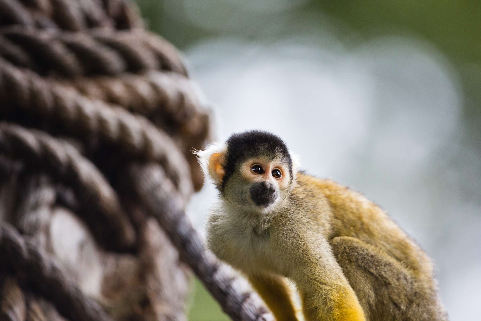 Monkey at The London Zoo