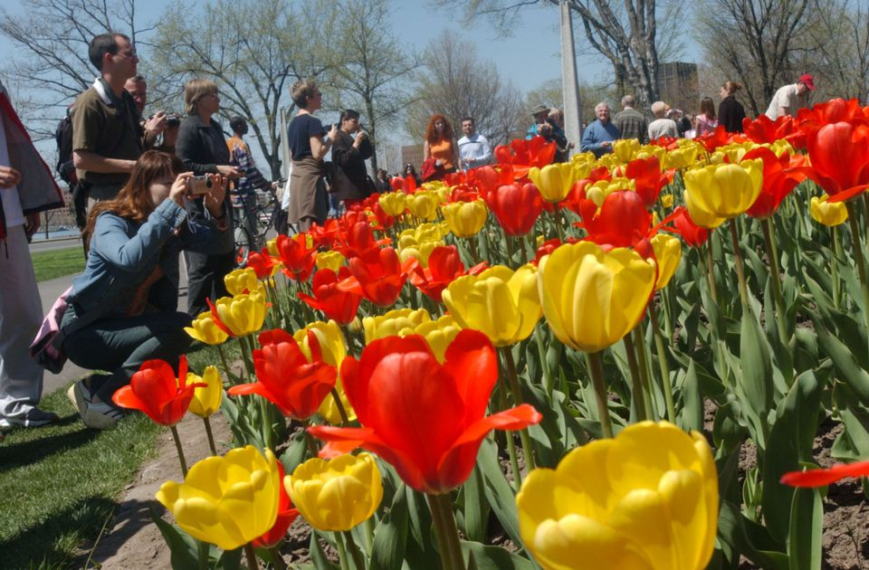 Thousands turn out to view the flower beds at the Canadian Tulip Festival in Ottawa.