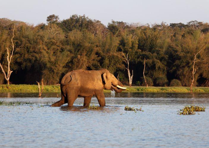 Elephant at Nagarhole