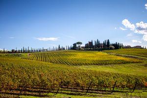 Chianti wine region in Tuscany, Italy