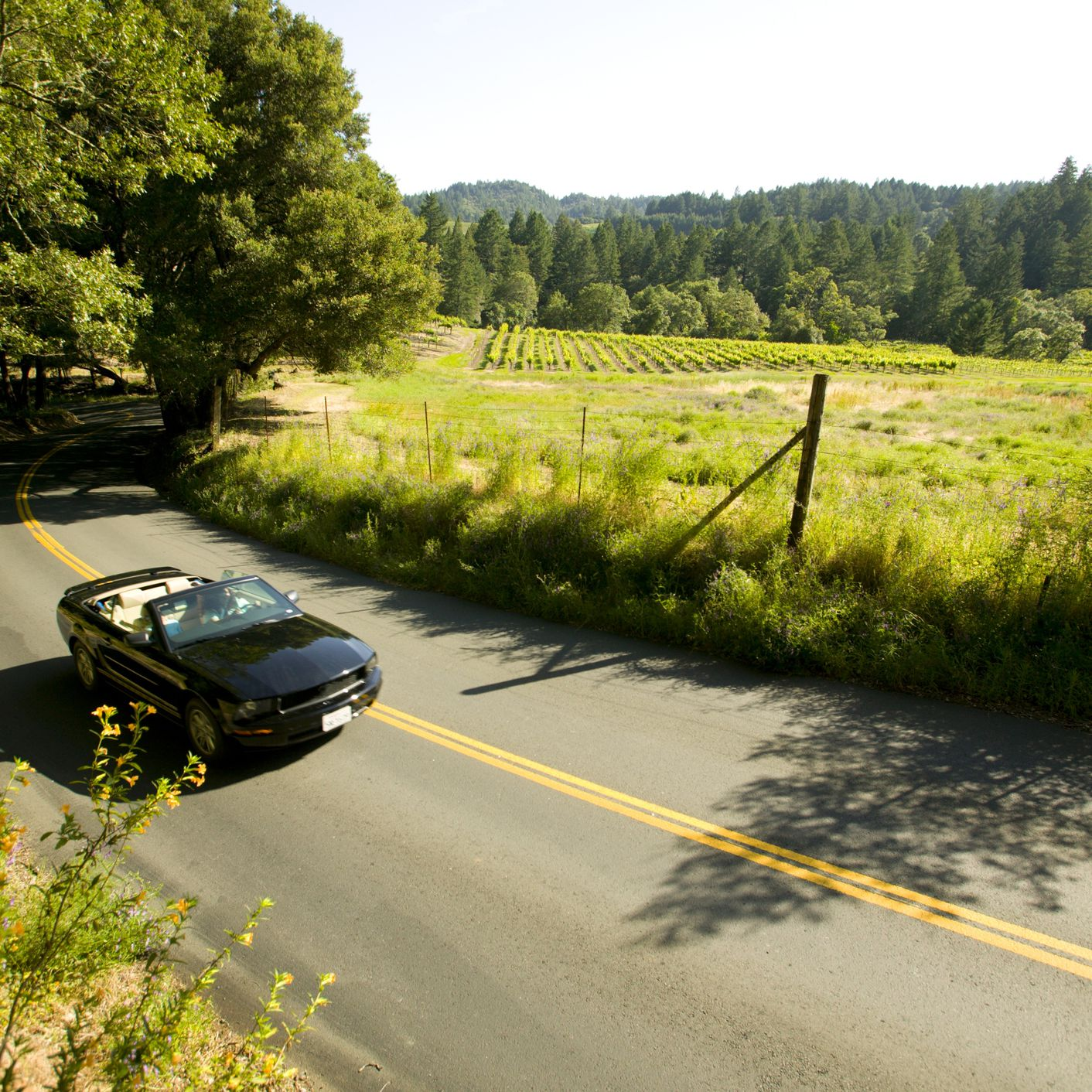 California Scenic Drives: 7 Routes That Will Make You Swoon