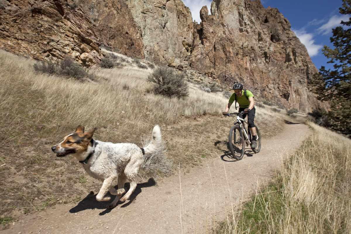 A dog runs along a mountain trail with a mountain biker not far behind.