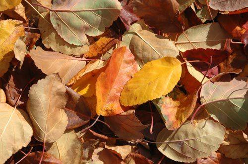 Gathering of fall color at Rancho San Rafael Park in Reno, Nevada