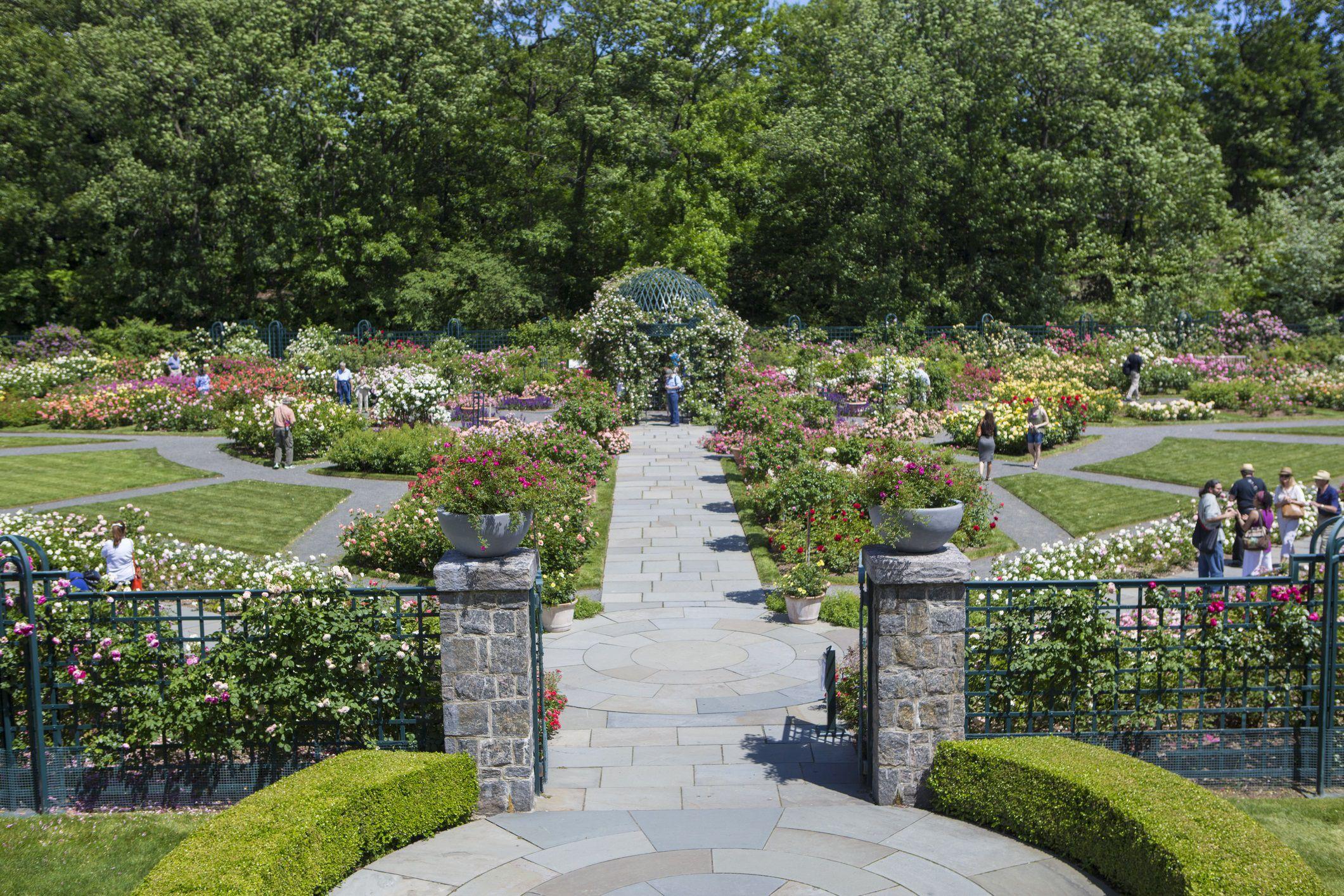 Rose Garden at The New York Botanical Garden