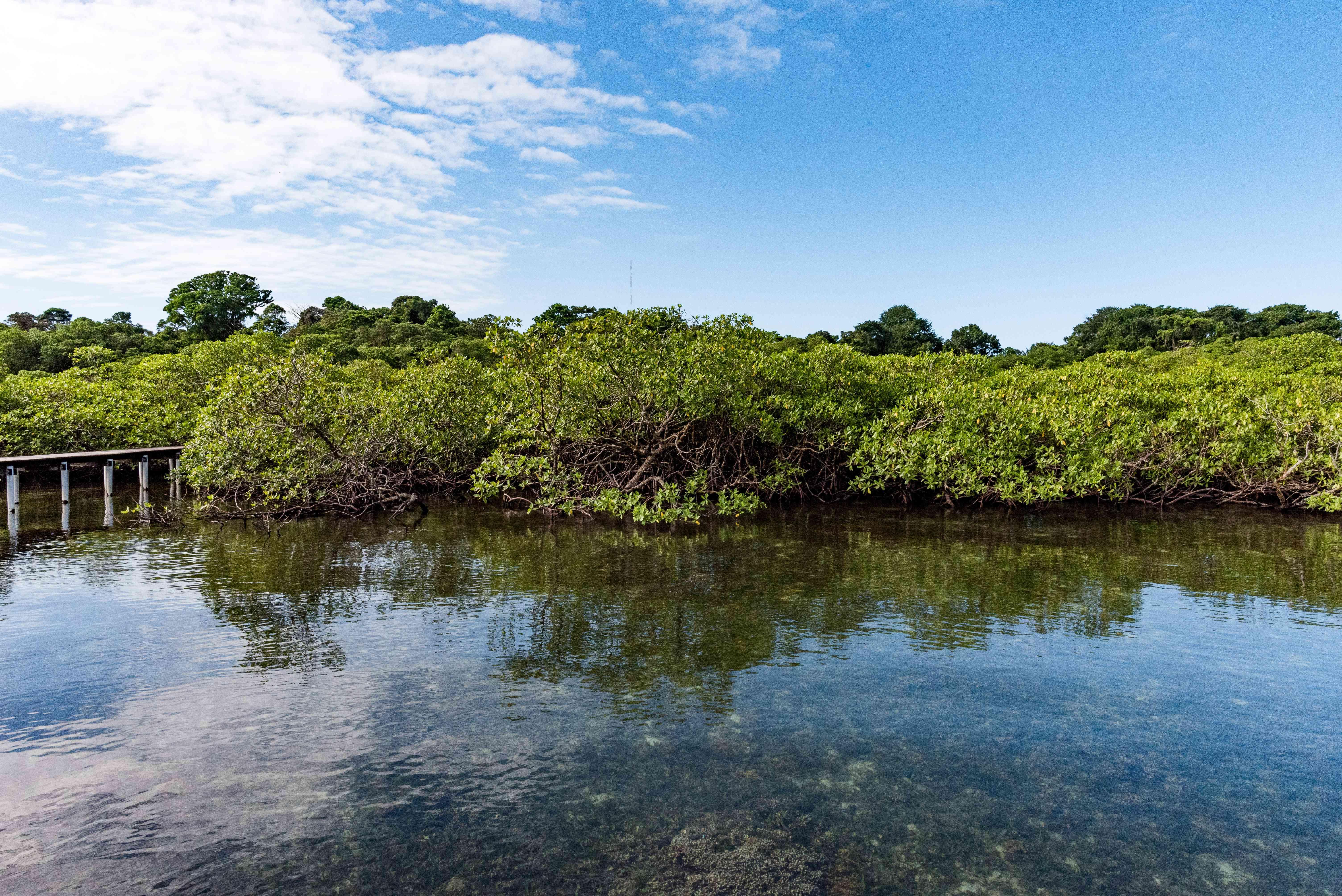 Clear waters along the Bocas del toro coast