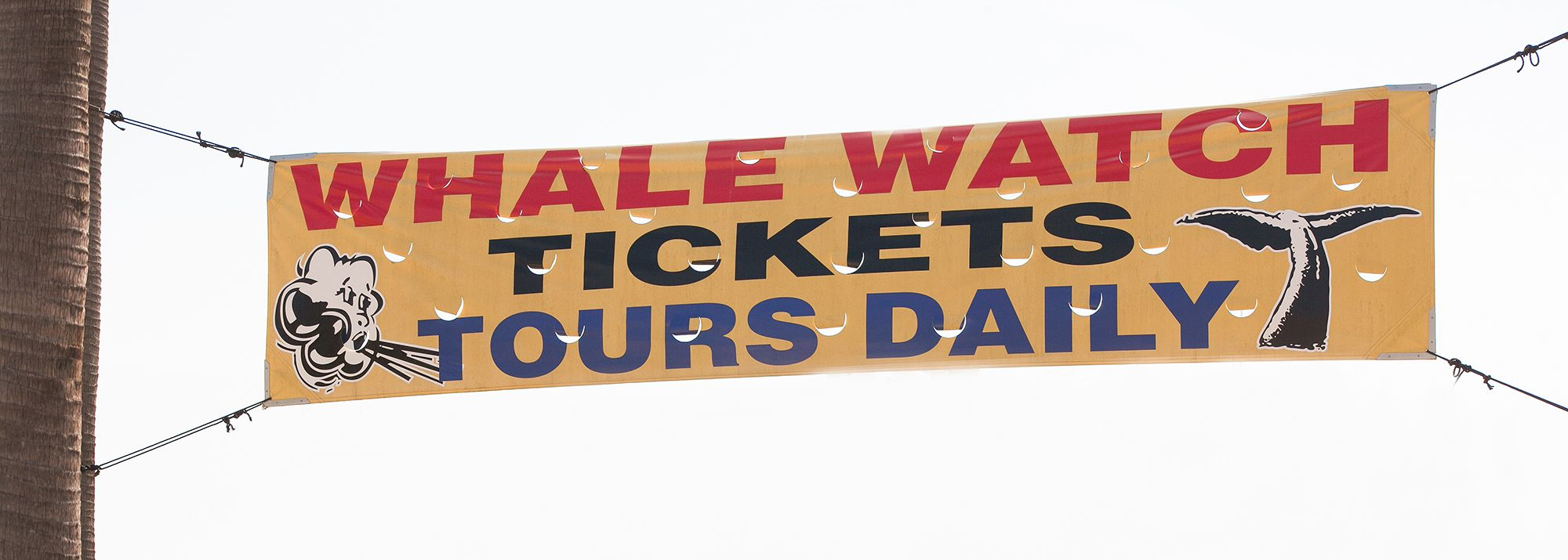 Whale watching tickets tours daily vinyl yellow banner sign