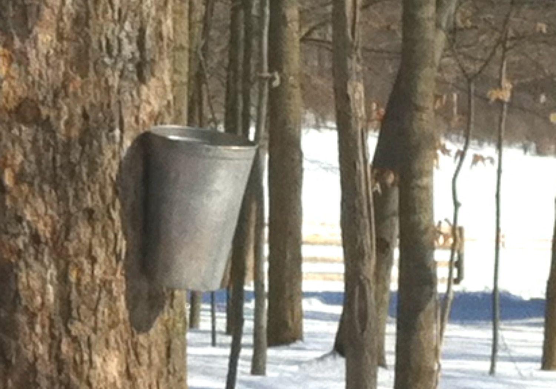 Hale Farm Maple Sugaring in Ohio