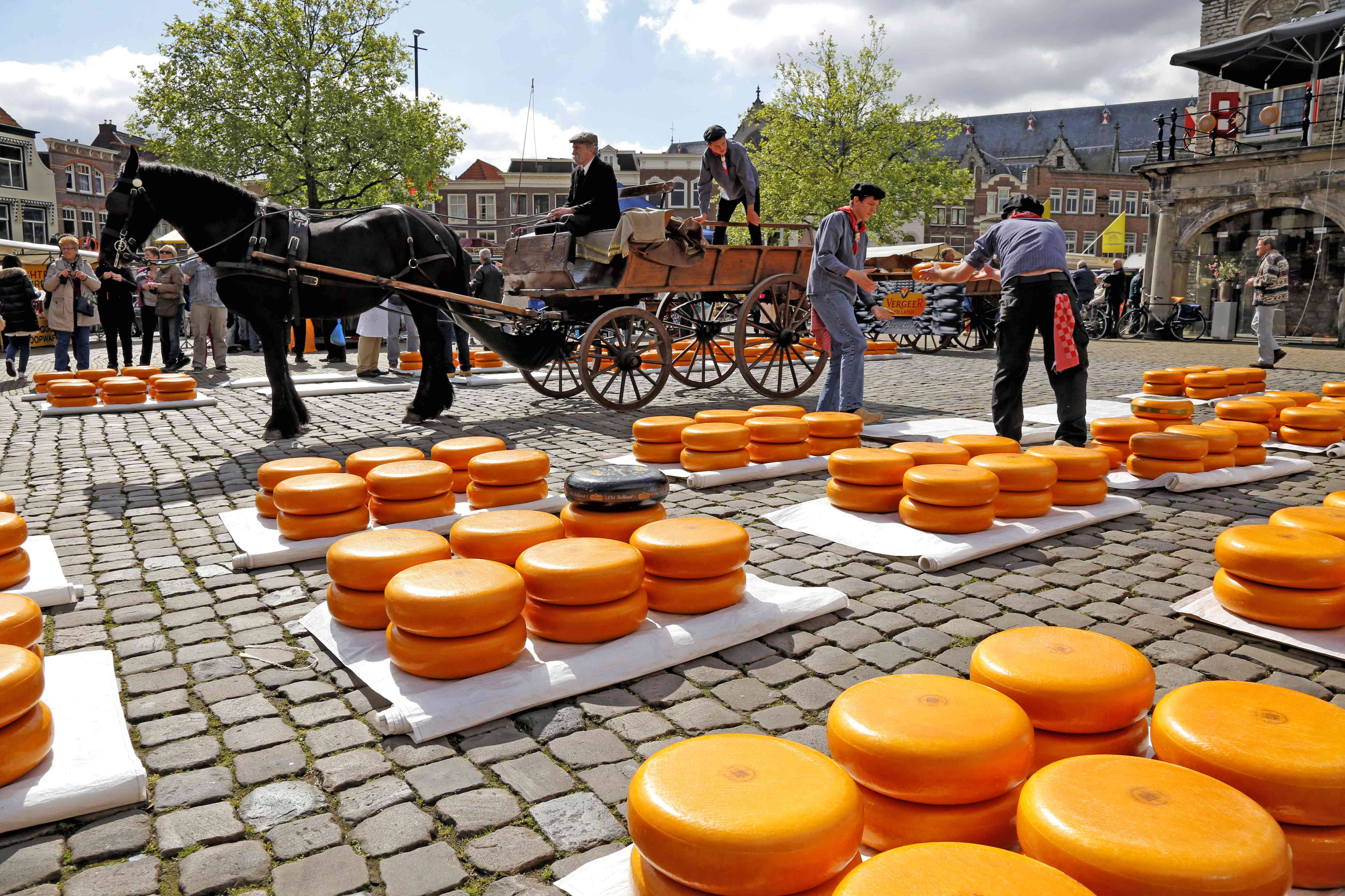 Horse-drawn carriage going page a bumc of gouda cheese wheels at the Gouda cheese market, Gouda, Netherlands