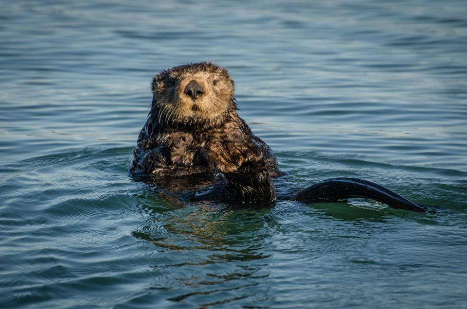 5 Wildlife Day Trips near Silicon Valley