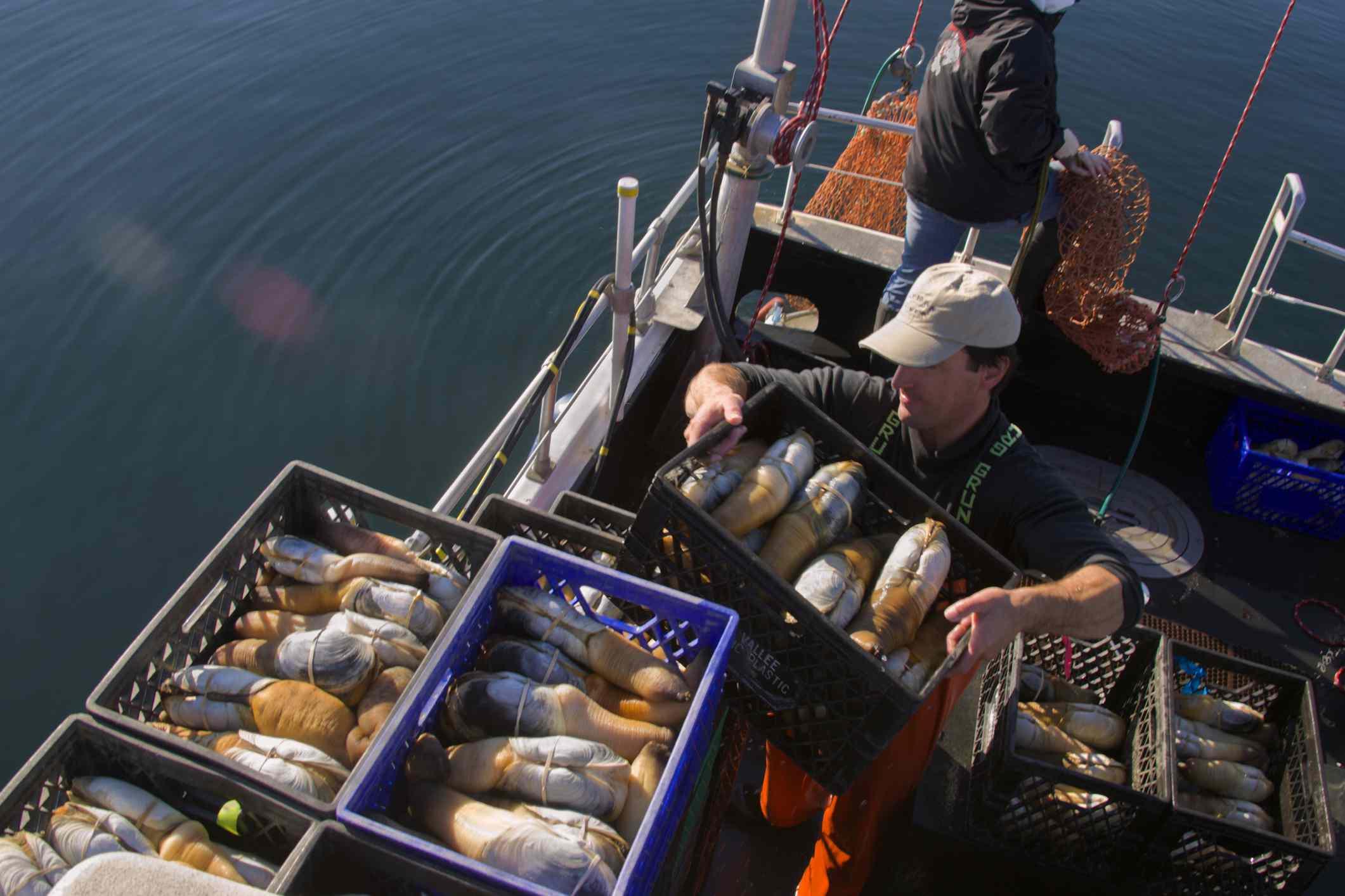 Squaxin Island Tribe geoduck fishery