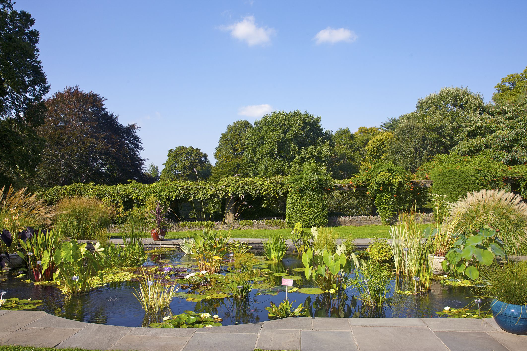 Wave Hill, Aquatic garden, water plants, formal garden pool, Riverdale, The Bronx, New York, NY, U.S.A.