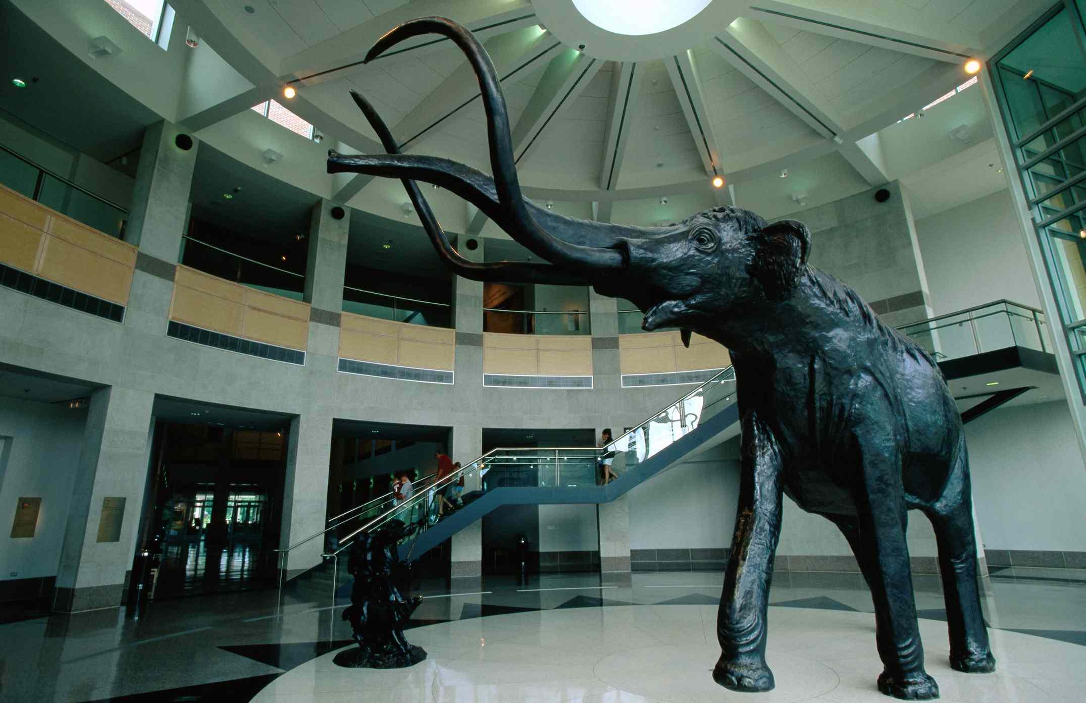 Mammoth in rotunda of Sam Noble Oklahoma Museum of Natural History, University of Oklahoma.
