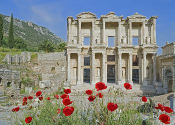 ancient Greek ruins with columns and red poppies in the foreground