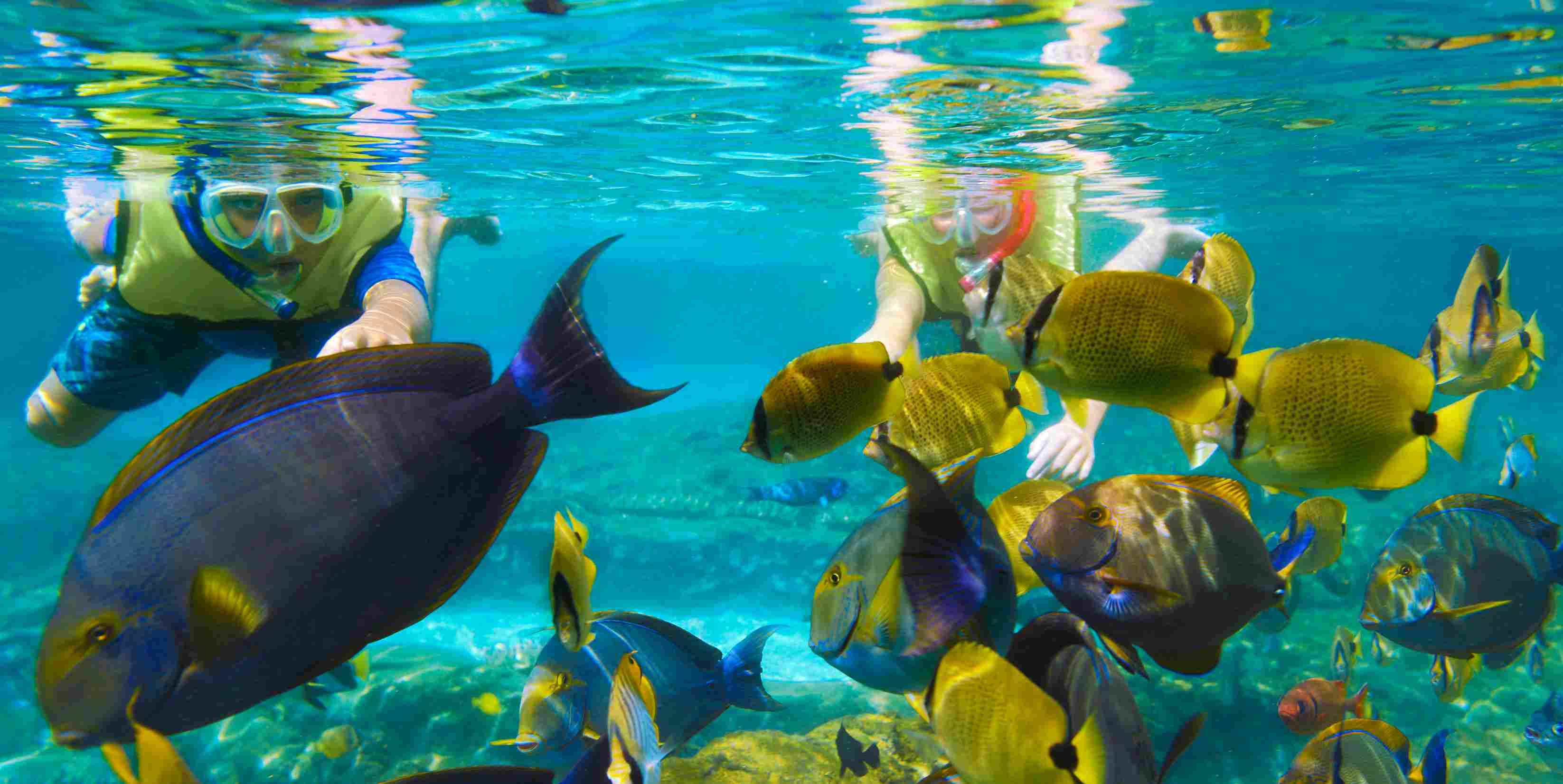 Snorkeling at Aulani's Rainbow Reef