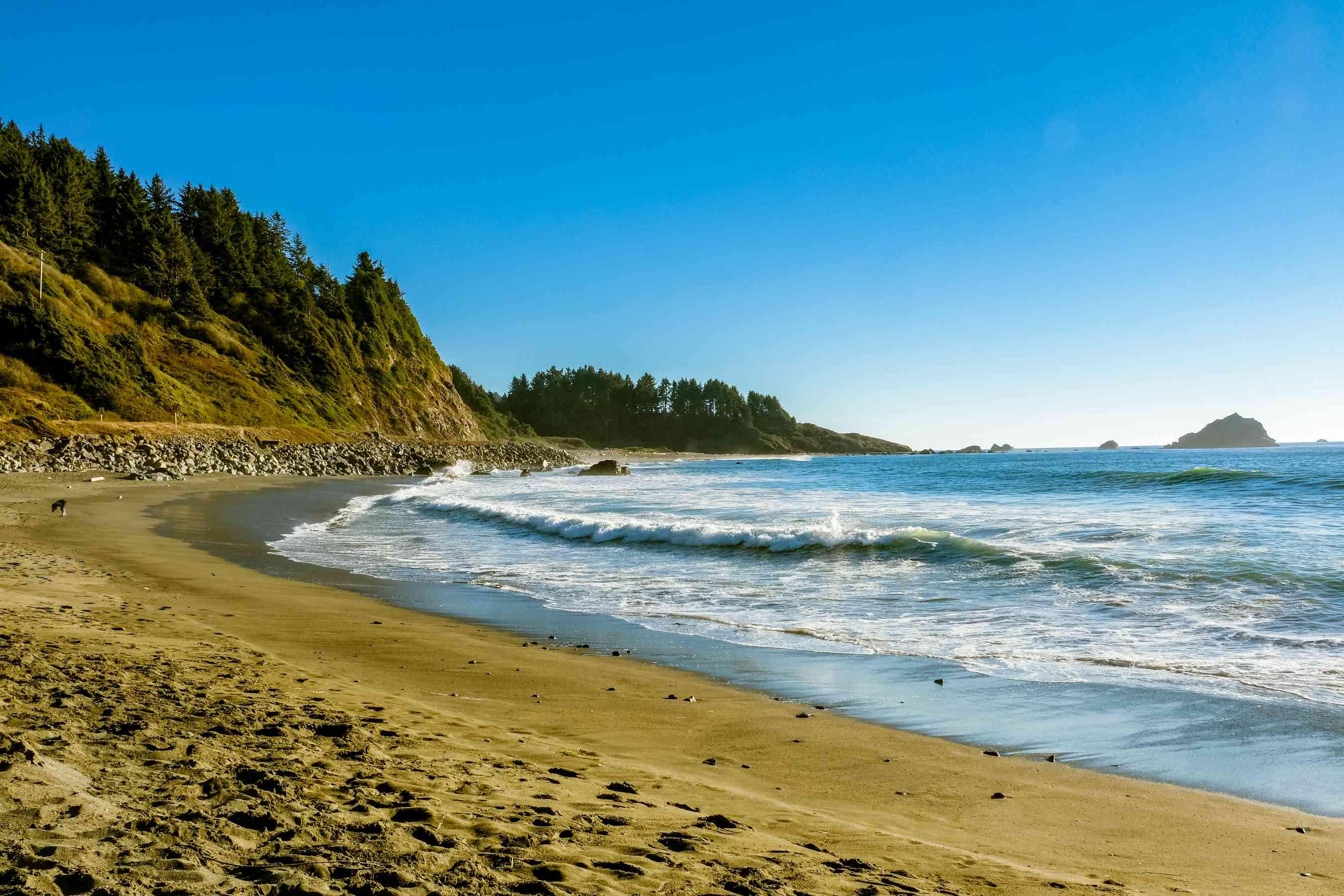 A beach along the Redwood National Park