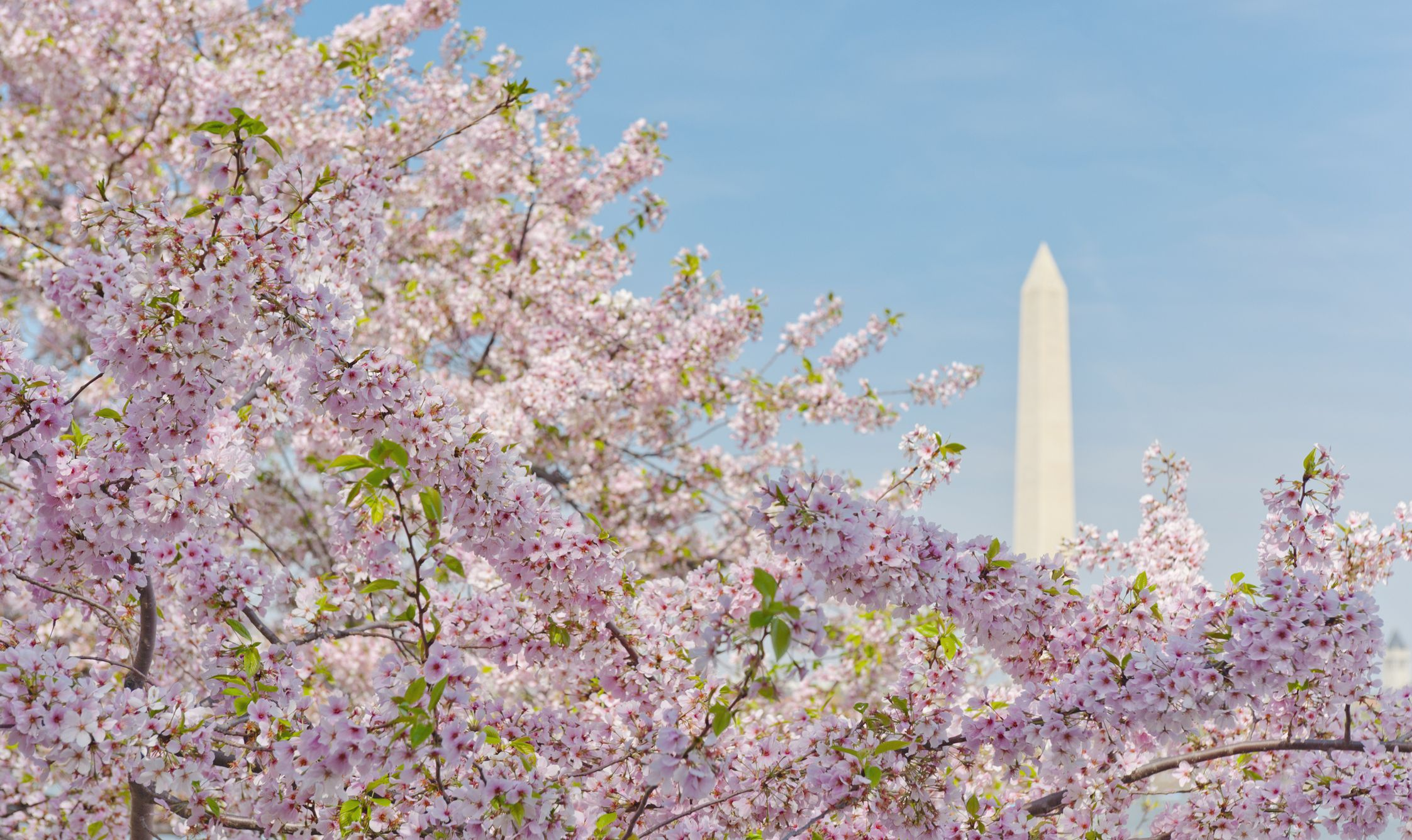 Your Trip to Washington, D.C.: The Complete Guide