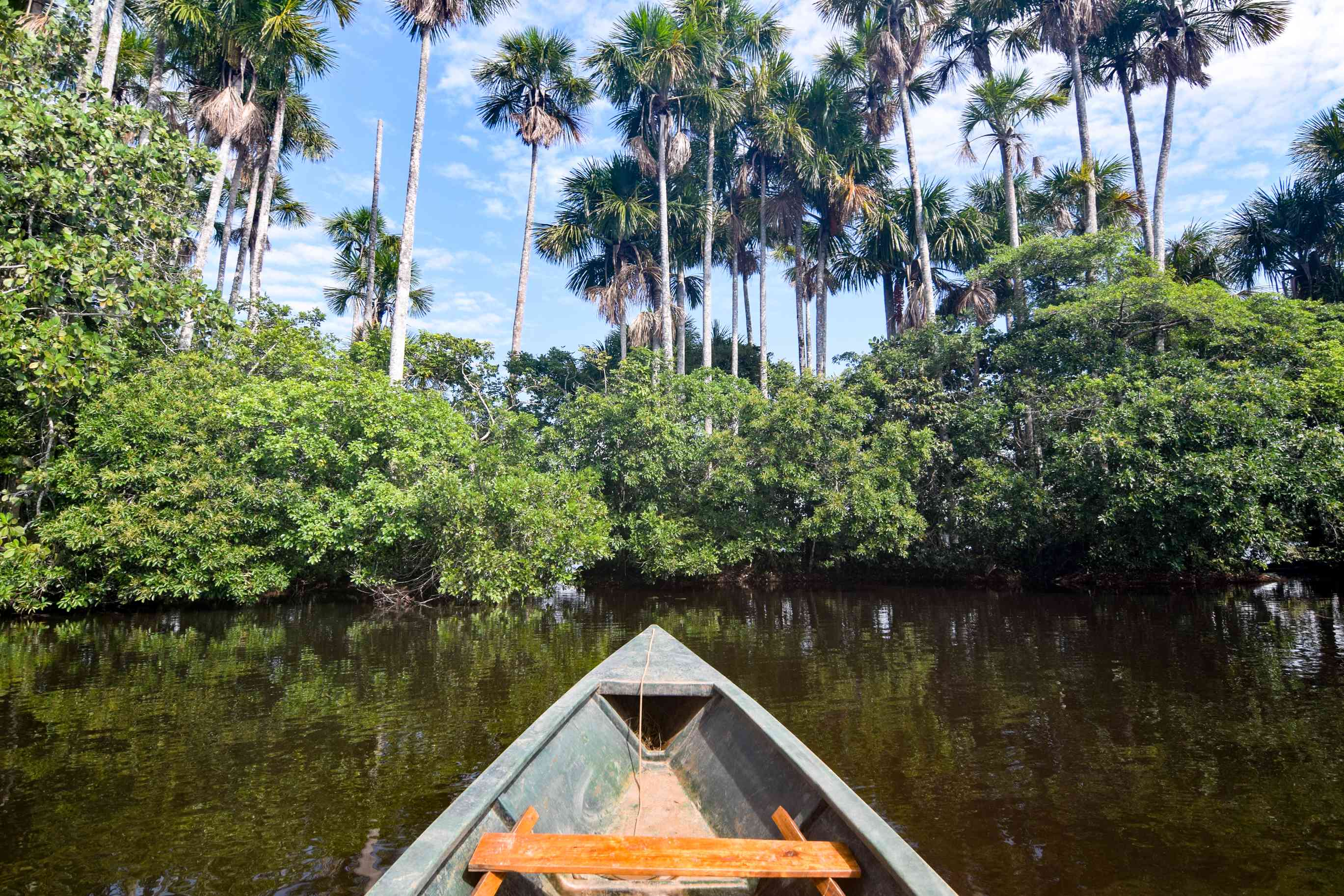 A boat floating into the rainforest