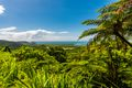 Daintree Rainforest with ocean in the distance