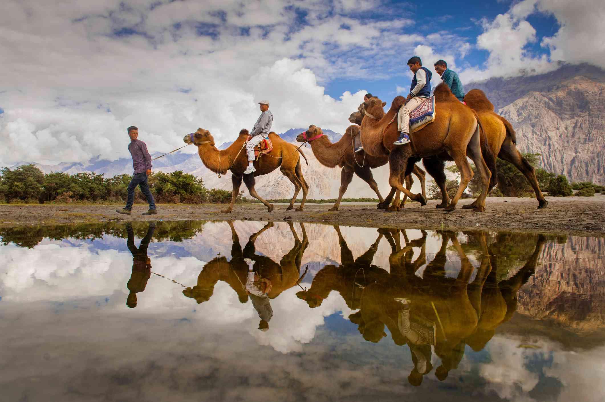 Traveller ride camel in sand dunes between Deskit and Hunder village.