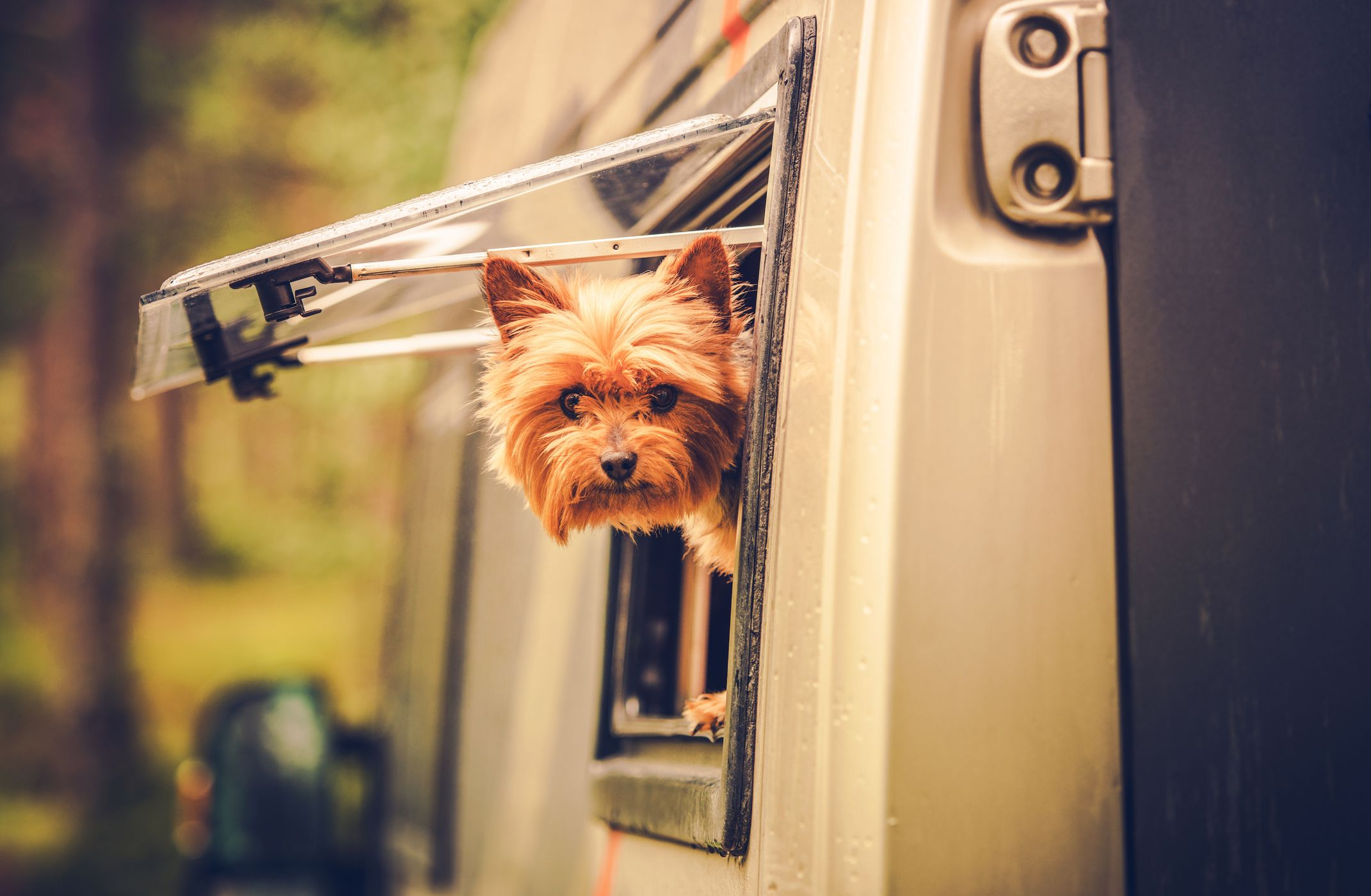 7 of the Best Dog-Friendly RV Parks in America