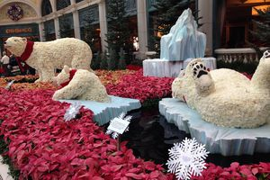 Decorative Christmas display of polar bears at the Bellagio in December 2014