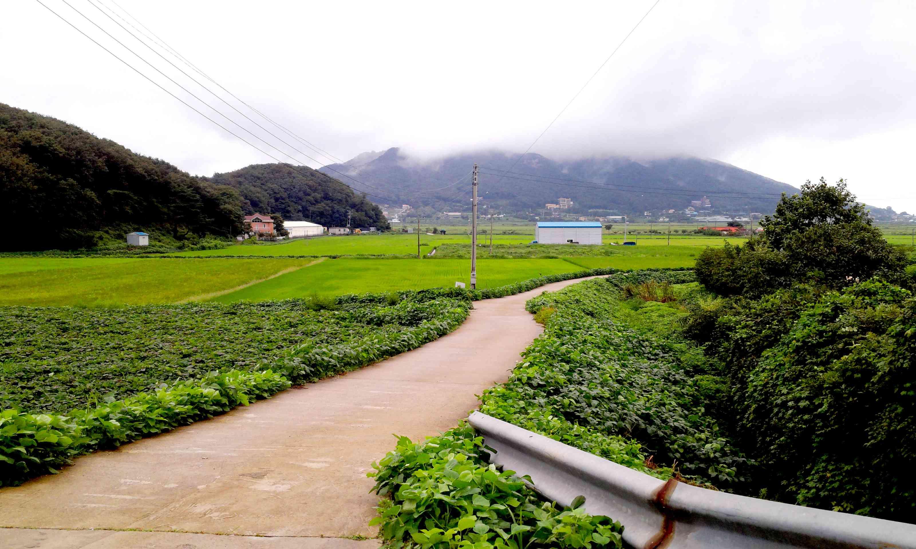 the natural scenery of Korea Ganghwado ( = Ganghwa island) , the countryside of Korea