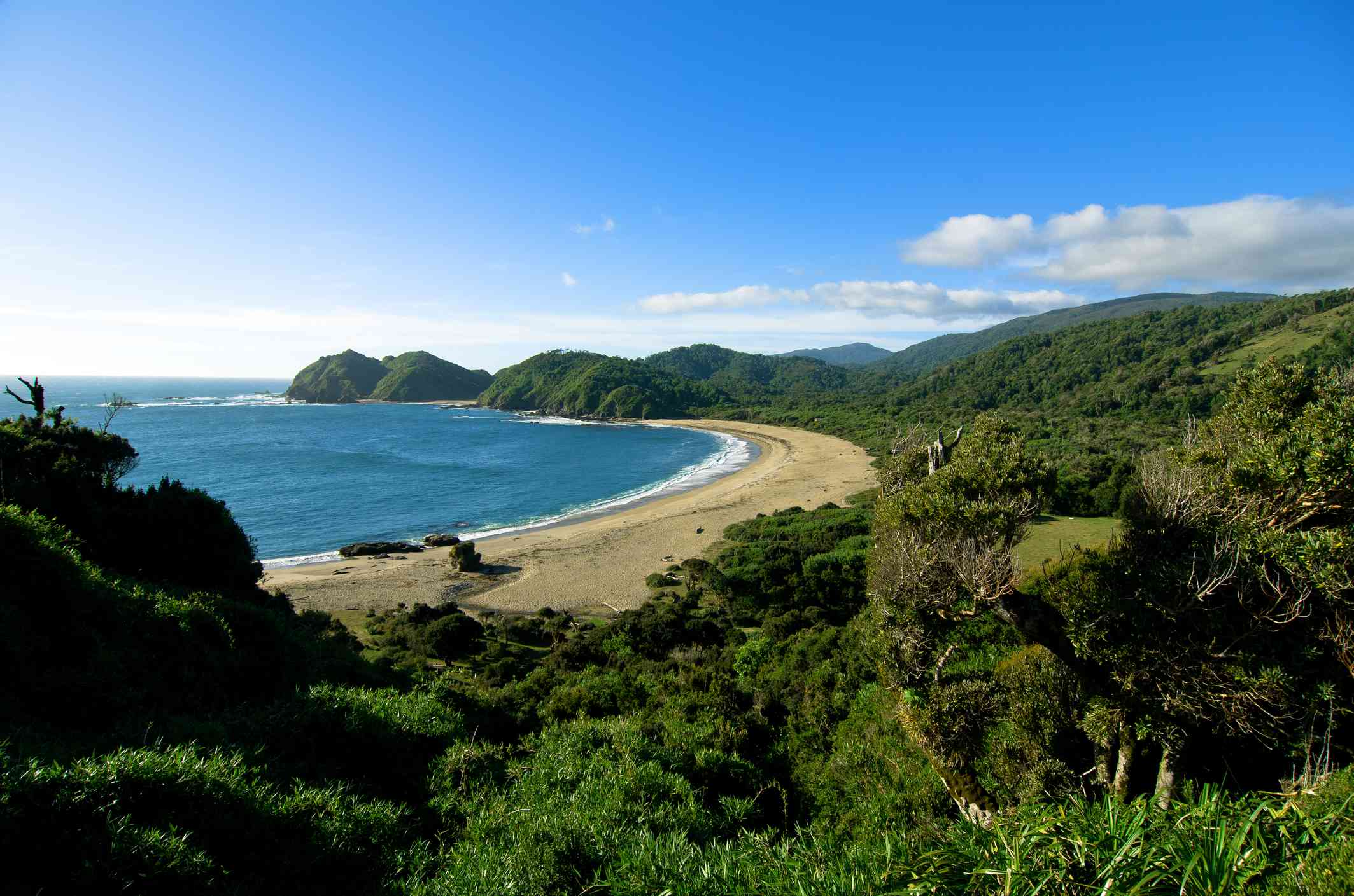 beach surrounded by forest