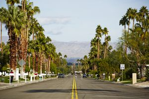Suburban street in Palm Springs with palm trees