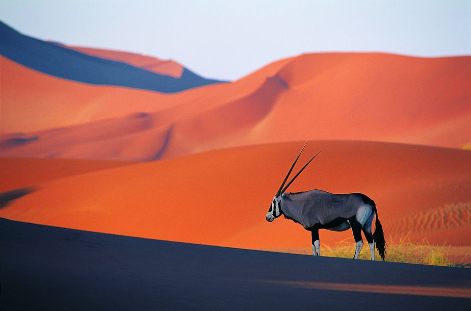 Namibia Travel Guide Essential Facts and Information Gemsbok