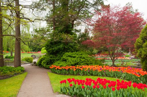 RBG-beds-of-tulips-gettyimages.jpg