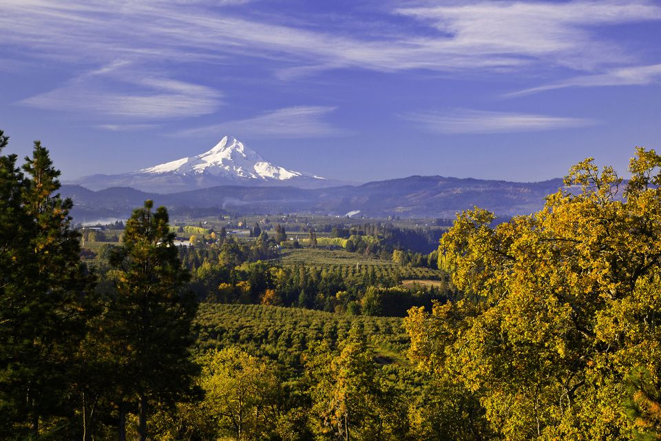 Fall Color in Oregon's Hood River Valley