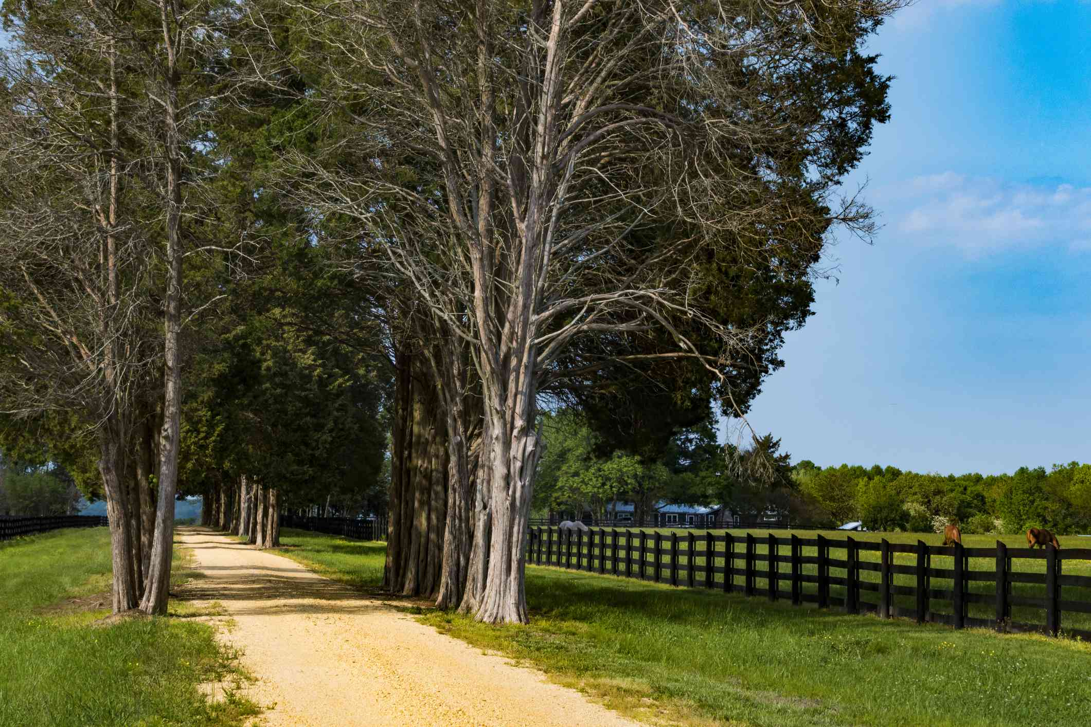 Sotterley, Maryland, USA May 1, 2019 A long alley of trees at a farmhouse.