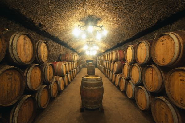 A wine cellar filled with dozens of aging barrels