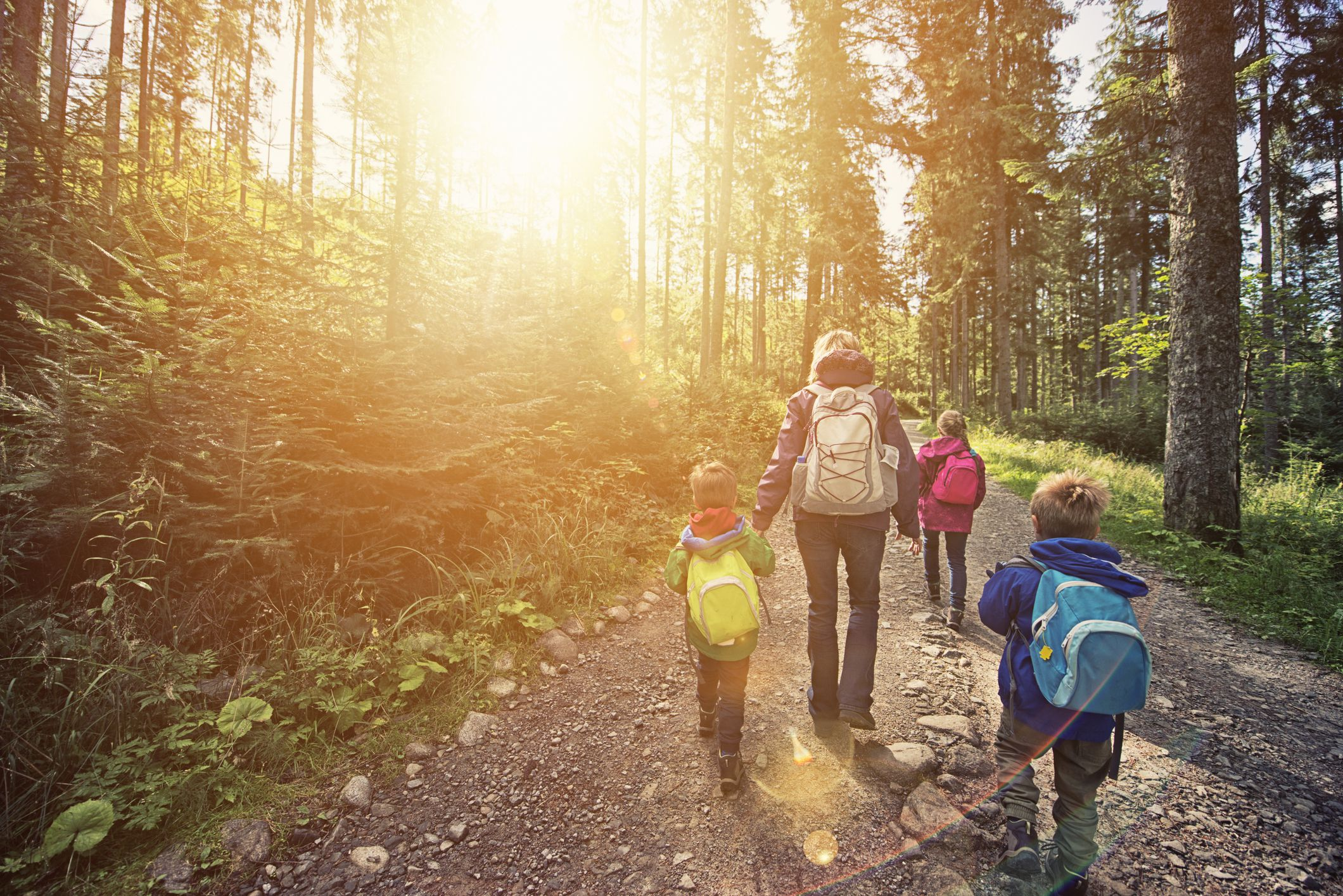 Madre e hijos caminando en bosque soleado