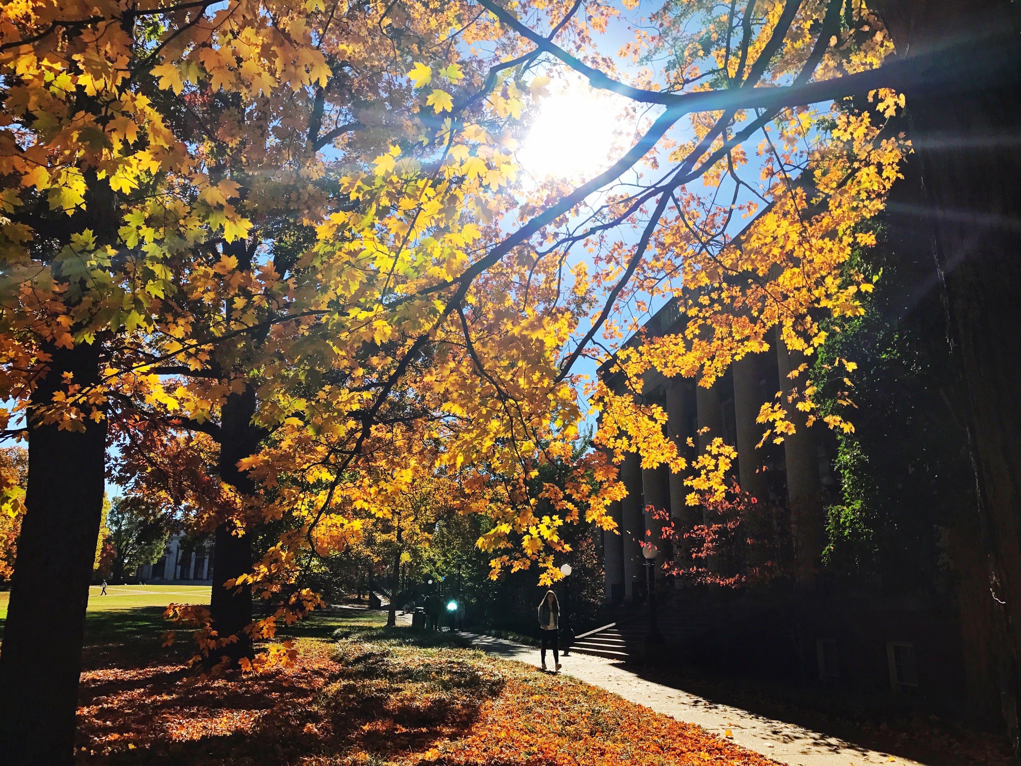 Yellow Flowers On Tree During Autumn in Nashville