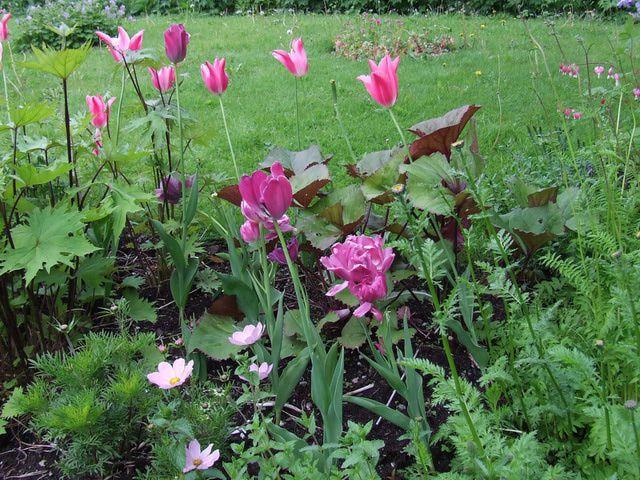 Flower Garden in Norway at Stalheim Hotel