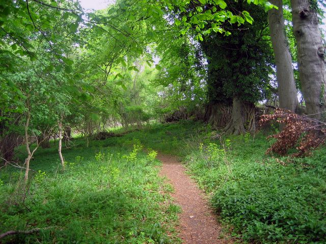 Bosque de Oxfordshire