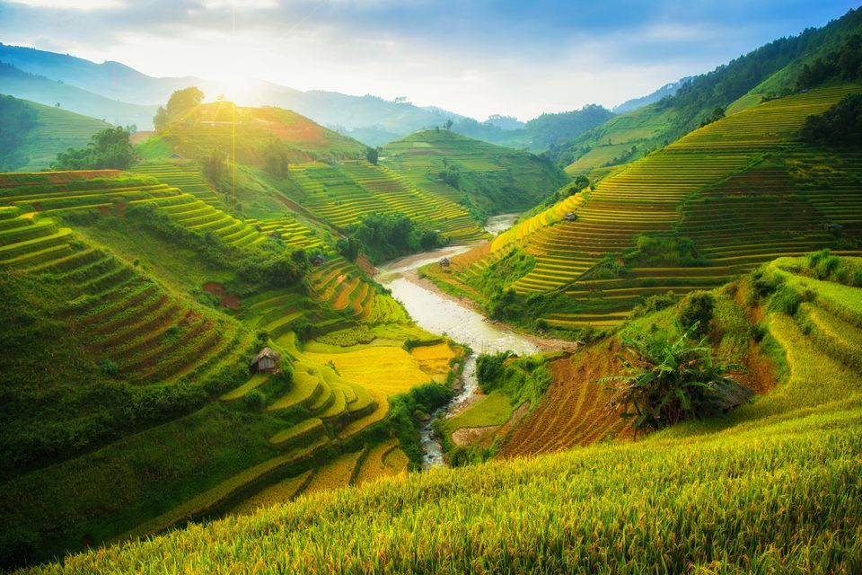 Green rice terraces during monsoon season in Vietnam
