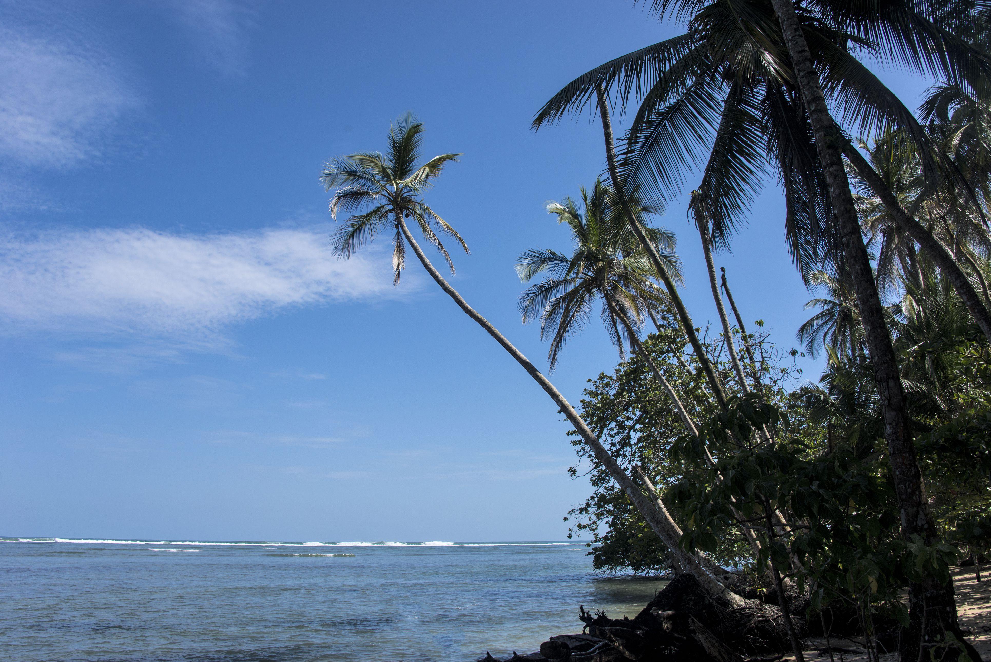 Palm Trees on Coast