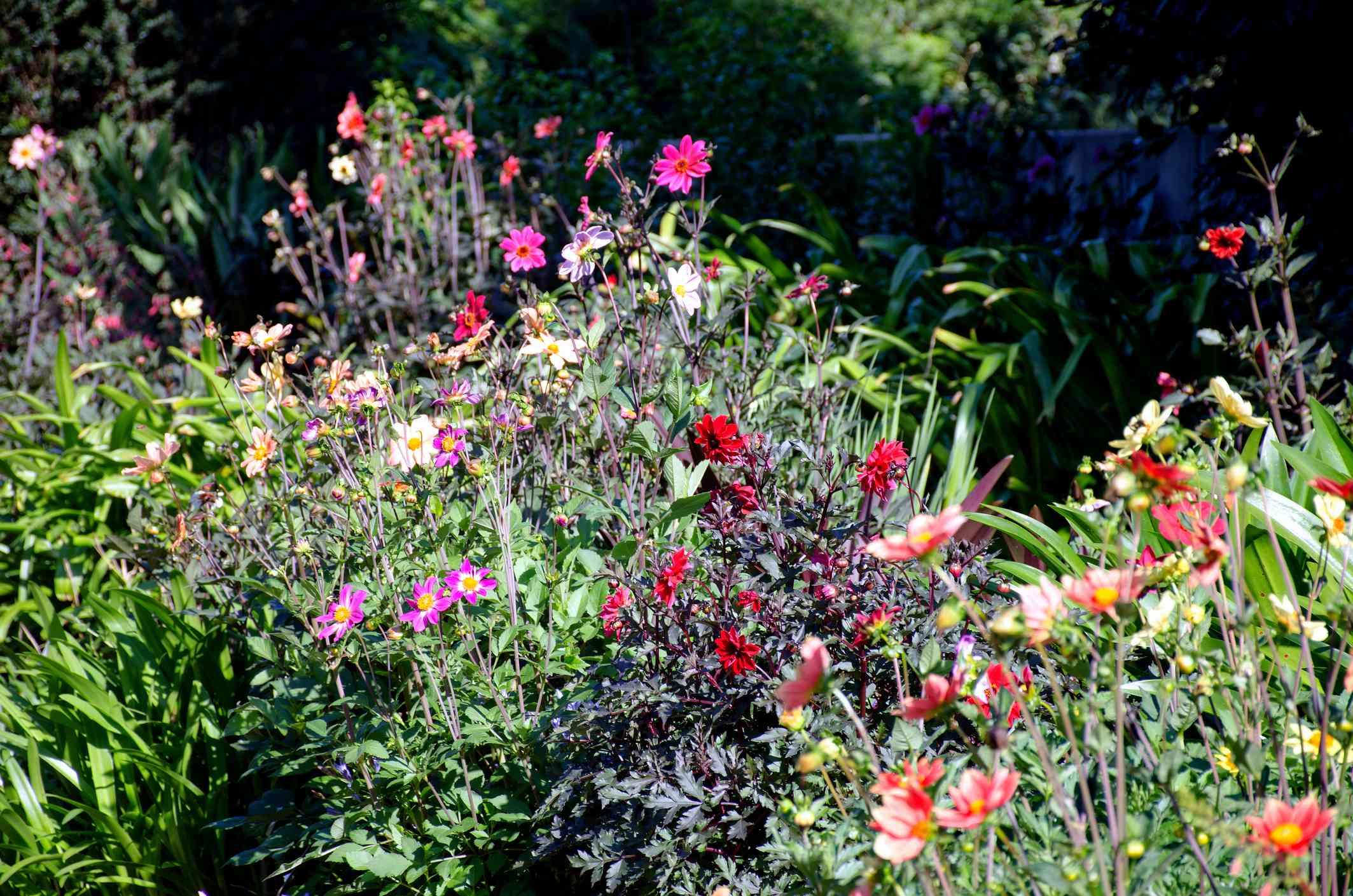 JC Raulston Arboretum North Carolina